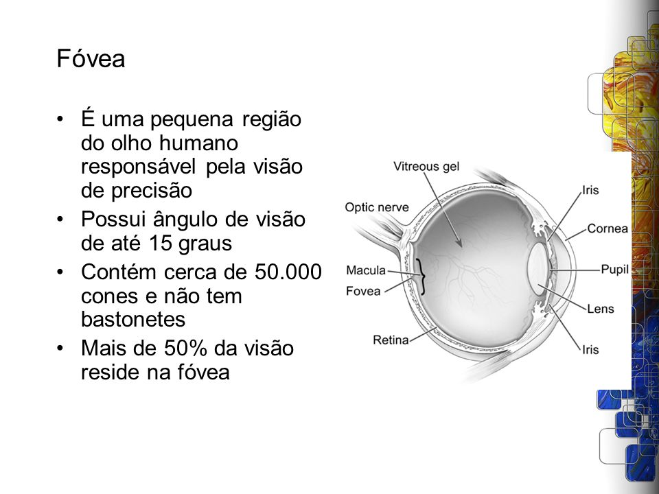 Fóvea É uma pequena região do olho humano responsável pela visão de precisão. Possui ângulo de visão de até 15 graus.