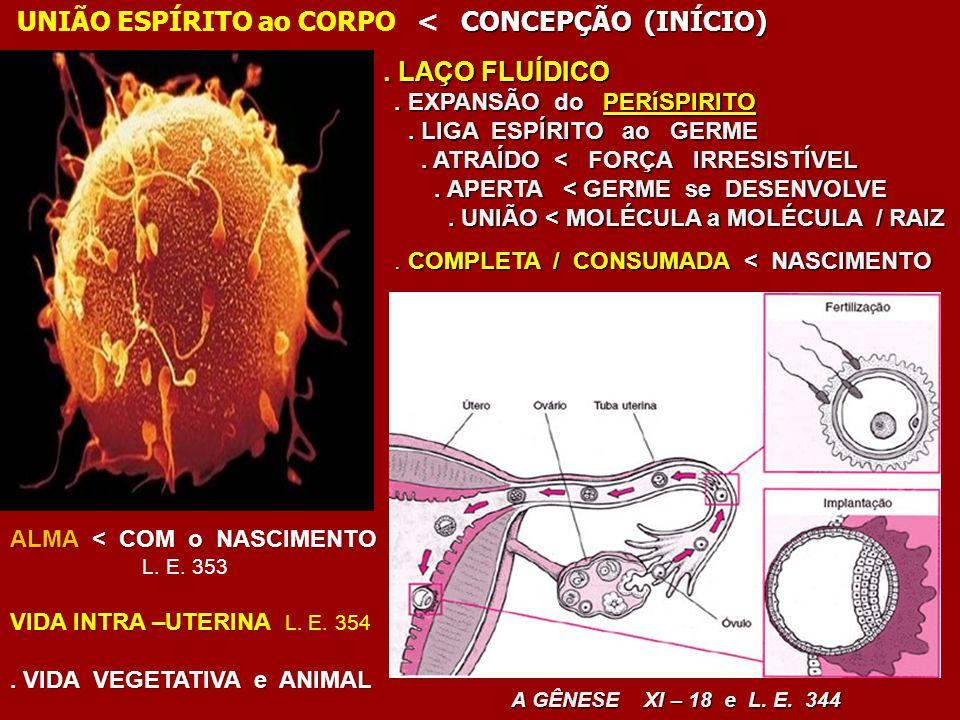 . LAÇO FLUÍDICO UNIÃO ESPÍRITO ao CORPO < CONCEPÇÃO (INÍCIO)