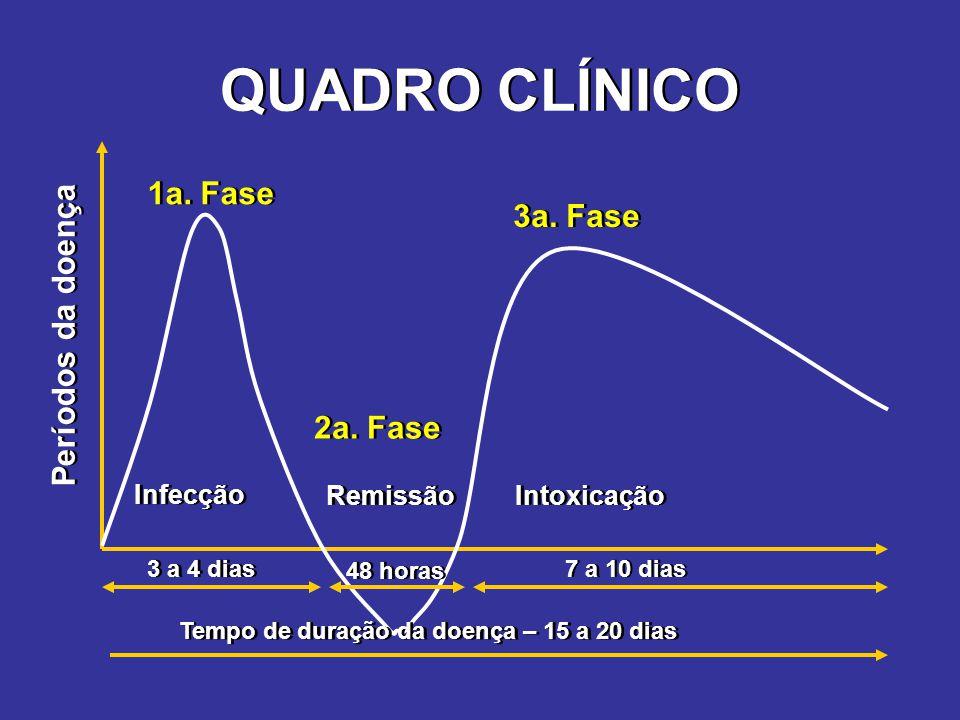QUADRO CLÍNICO 1a. Fase 3a. Fase Períodos da doença 2a. Fase Infecção