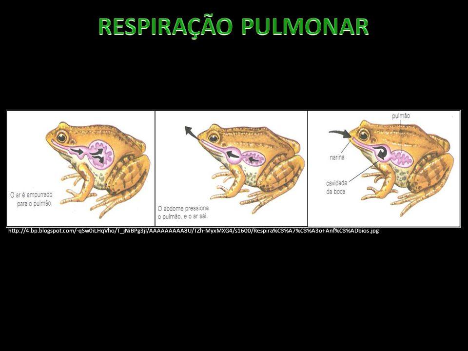 RESPIRAÇÃO PULMONAR http://4.bp.blogspot.com/-qSw0iLHqVho/T_jNiBPg3jI/AAAAAAAAA8U/TZh-MyxMXG4/s1600/Respira%C3%A7%C3%A3o+Anf%C3%ADbios.jpg.