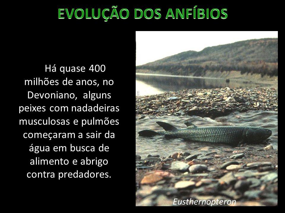 EVOLUÇÃO DOS ANFÍBIOS
