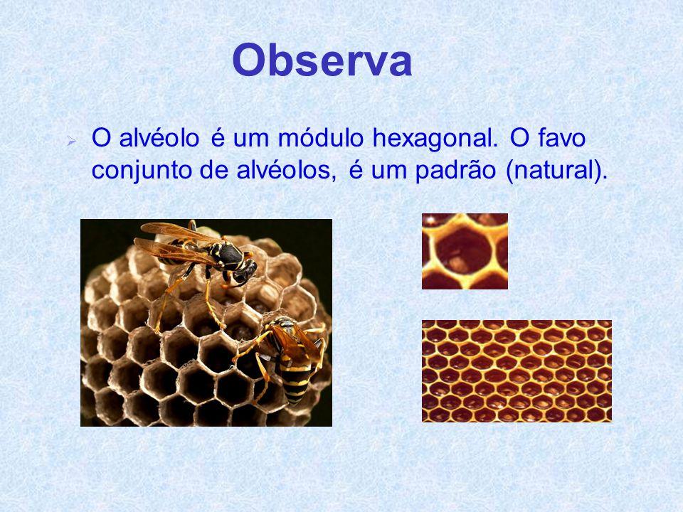 Agostinho E.V.T. Ano 2001/02. Observa. O alvéolo é um módulo hexagonal.