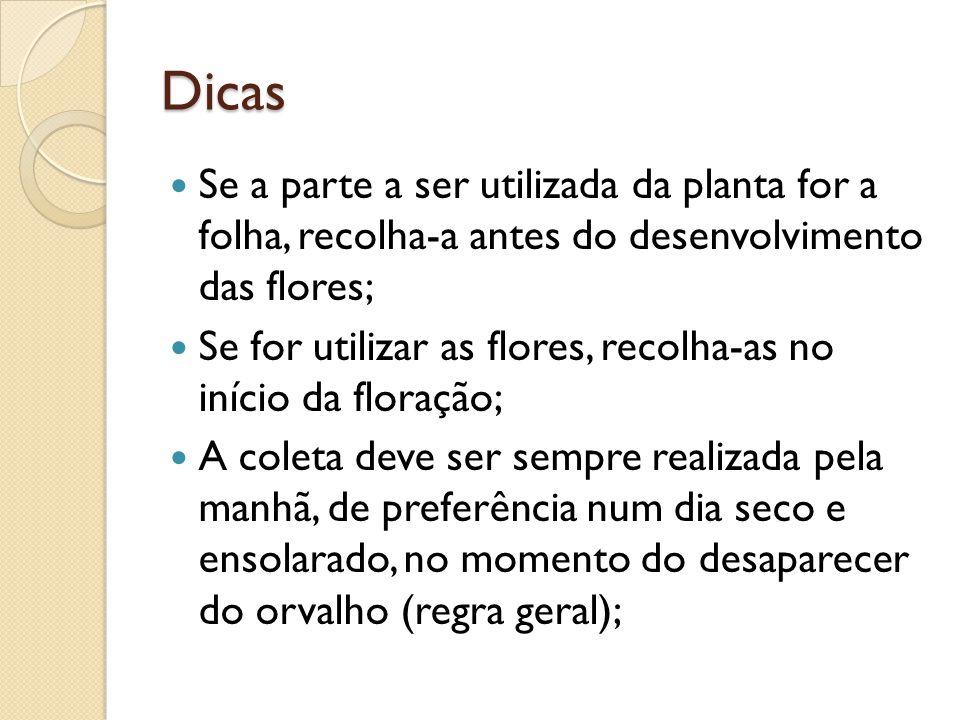 Dicas Se a parte a ser utilizada da planta for a folha, recolha-a antes do desenvolvimento das flores;