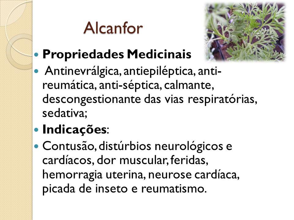 Alcanfor Propriedades Medicinais