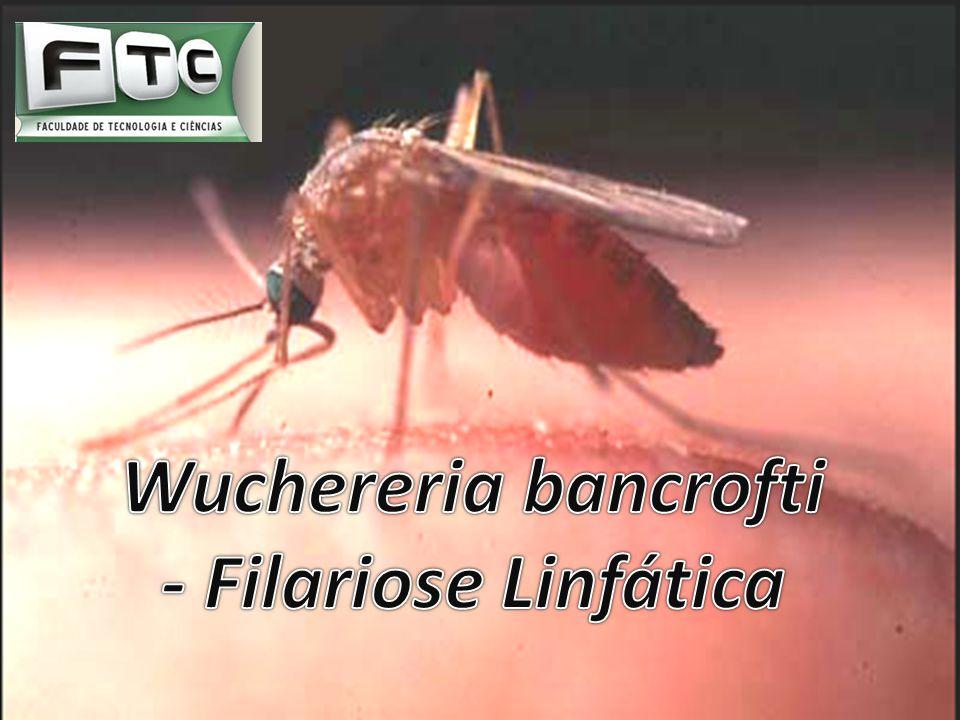 Wuchereria bancrofti - Filariose Linfática