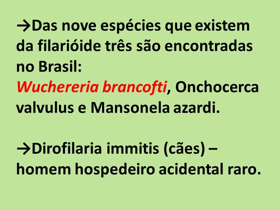→Das nove espécies que existem da filarióide três são encontradas no Brasil: