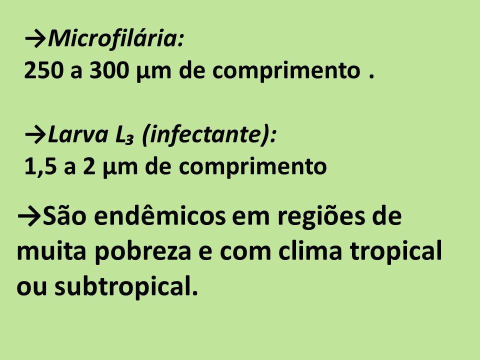 →São endêmicos em regiões de muita pobreza e com clima tropical ou subtropical.