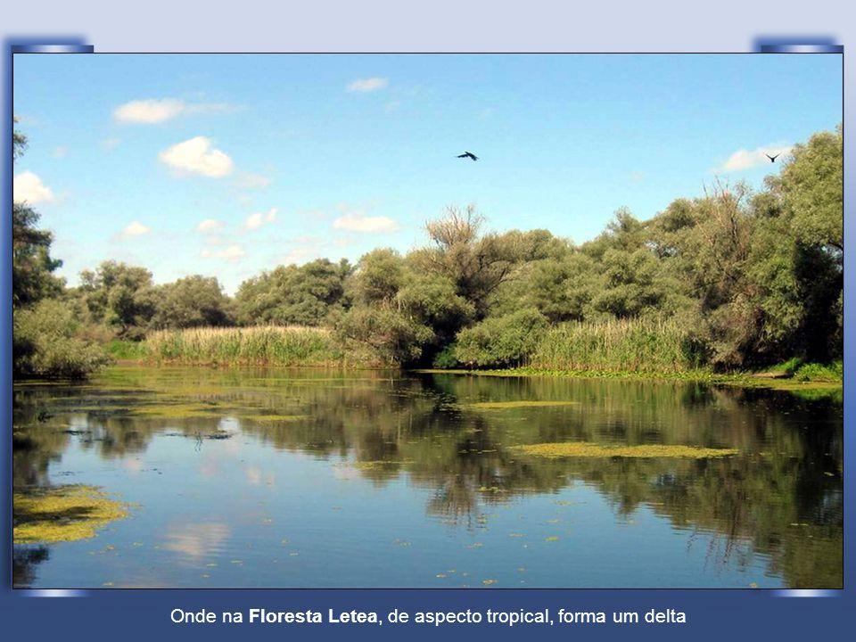 Onde na Floresta Letea, de aspecto tropical, forma um delta