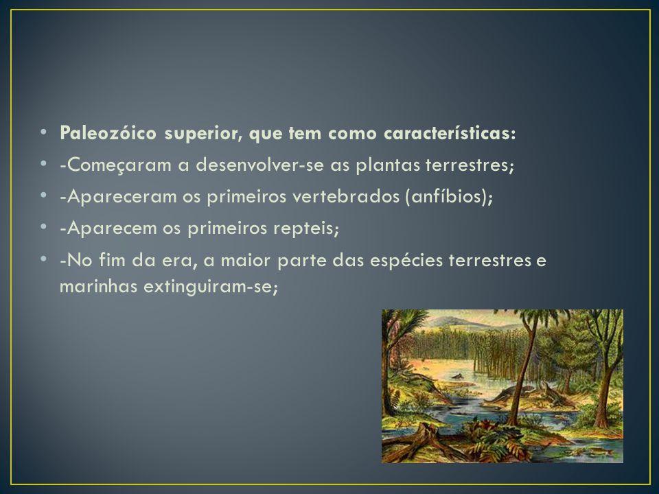 Paleozóico superior, que tem como características: