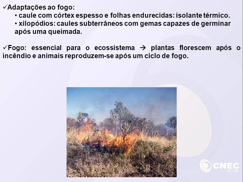 Adaptações ao fogo: caule com córtex espesso e folhas endurecidas: isolante térmico.