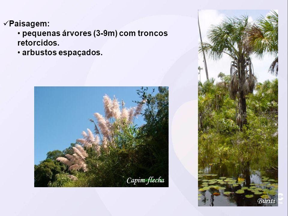 Paisagem: pequenas árvores (3-9m) com troncos retorcidos. arbustos espaçados. Capim-flecha Buriti