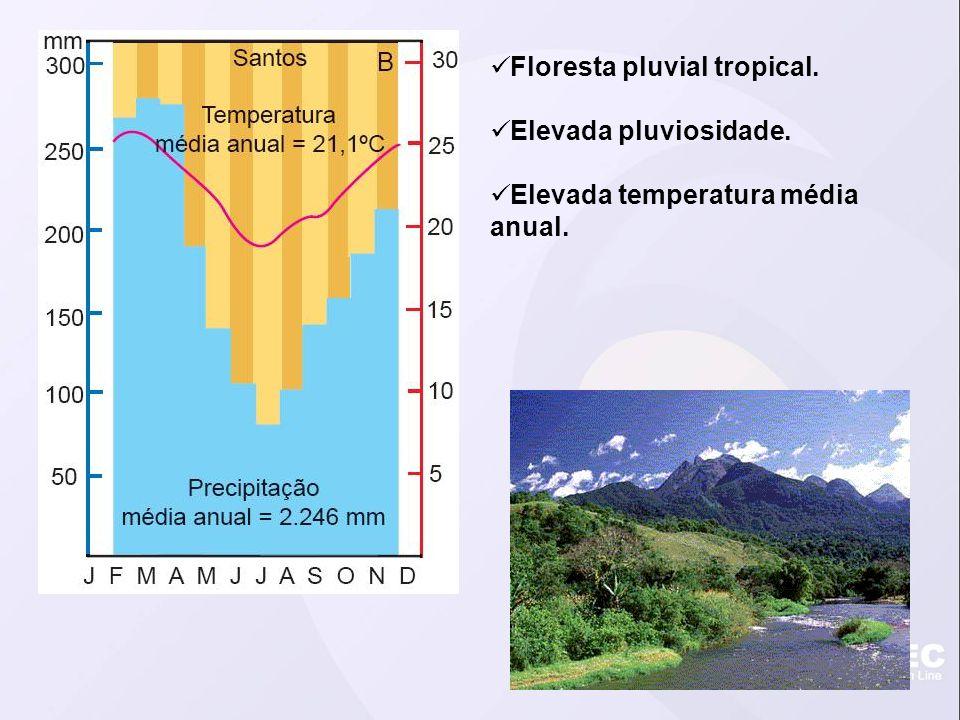 Floresta pluvial tropical.