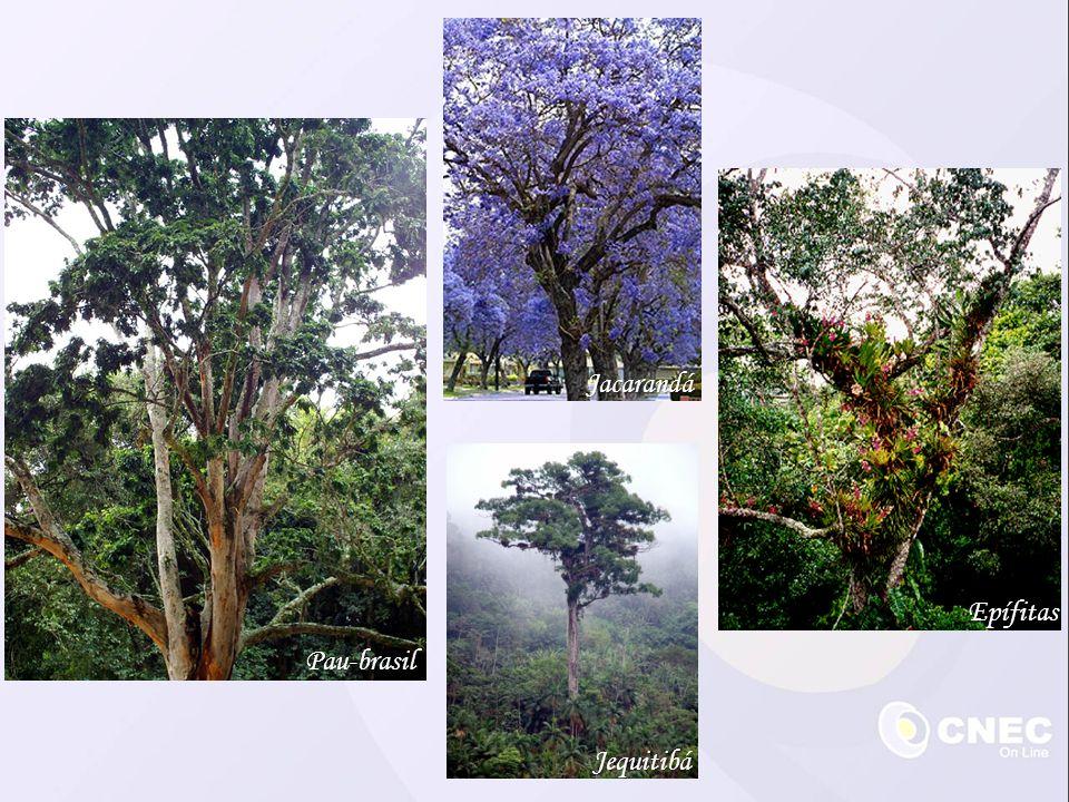 Jacarandá Epífitas Pau-brasil Jequitibá