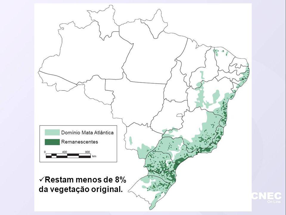 Restam menos de 8% da vegetação original.