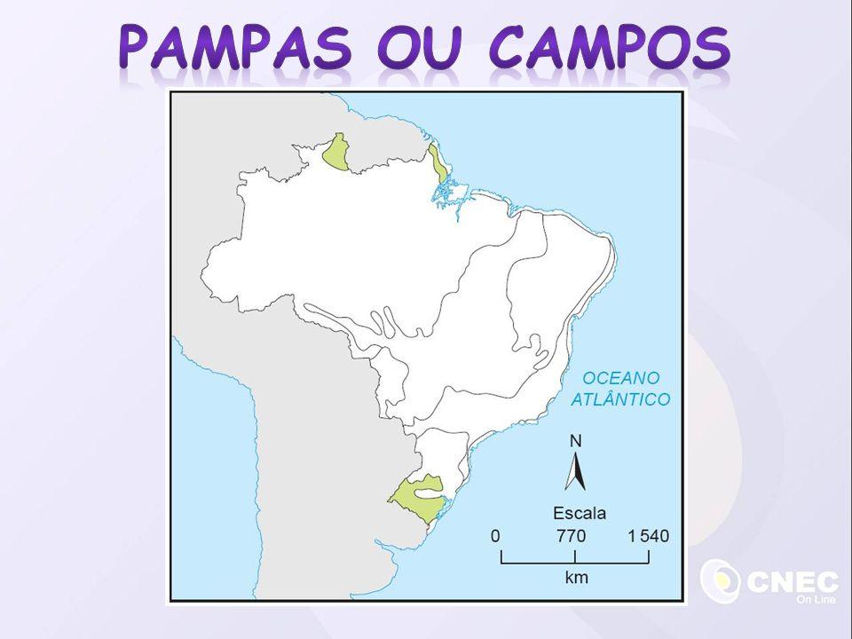 Pampas OU CAMPOS