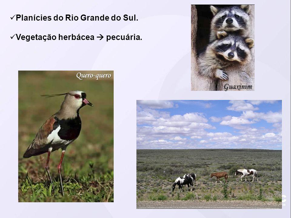 Planícies do Rio Grande do Sul.