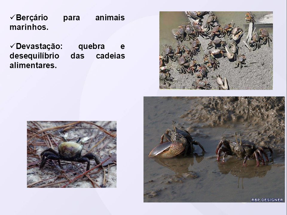Berçário para animais marinhos.