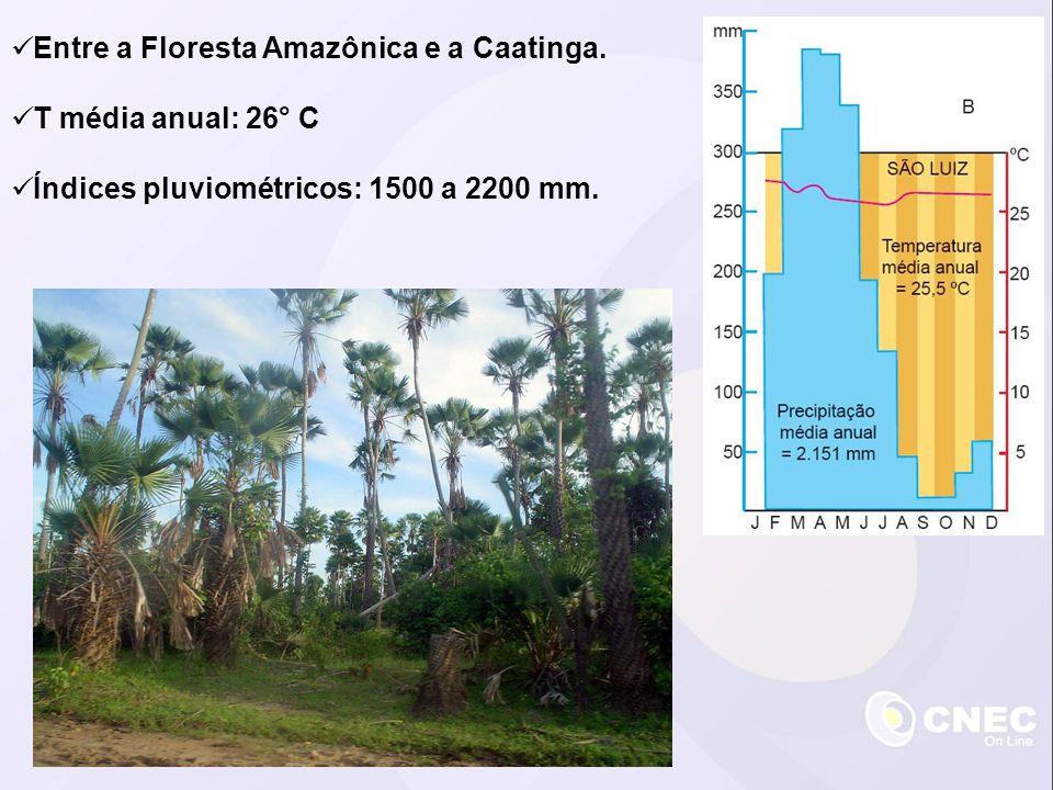 Entre a Floresta Amazônica e a Caatinga.