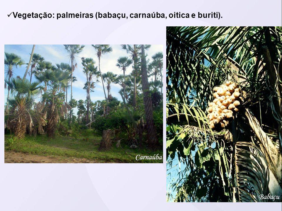Vegetação: palmeiras (babaçu, carnaúba, oitica e buriti).