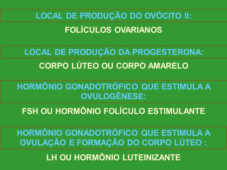 LOCAL DE PRODUÇÃO DO OVÓCITO II: