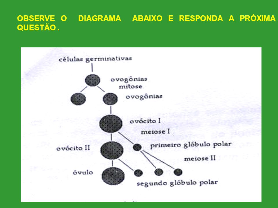 OBSERVE O DIAGRAMA ABAIXO E RESPONDA A PRÓXIMA QUESTÃO .