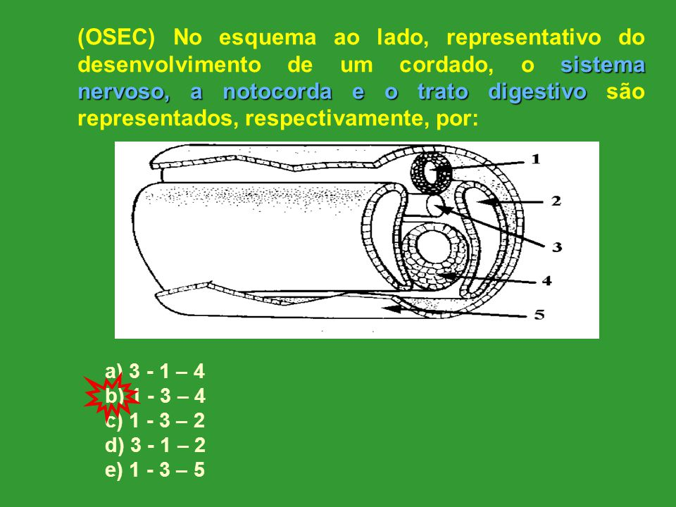(OSEC) No esquema ao lado, representativo do desenvolvimento de um cordado, o sistema nervoso, a notocorda e o trato digestivo são representados, respectivamente, por: