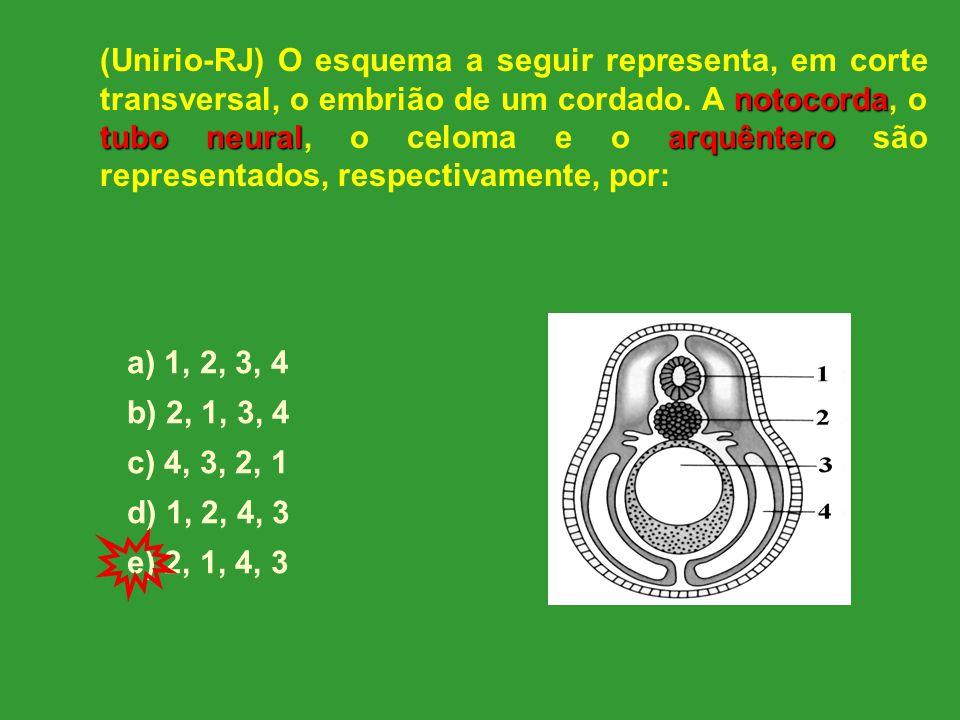 (Unirio-RJ) O esquema a seguir representa, em corte transversal, o embrião de um cordado. A notocorda, o tubo neural, o celoma e o arquêntero são representados, respectivamente, por: