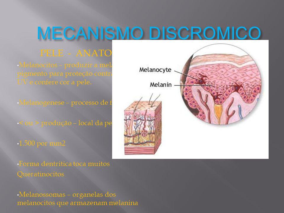 MECANISMO DISCROMICO PELE - ANATOMIA