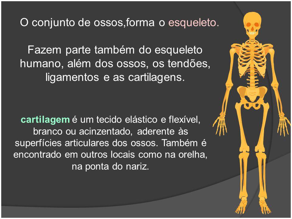 O conjunto de ossos,forma o esqueleto.