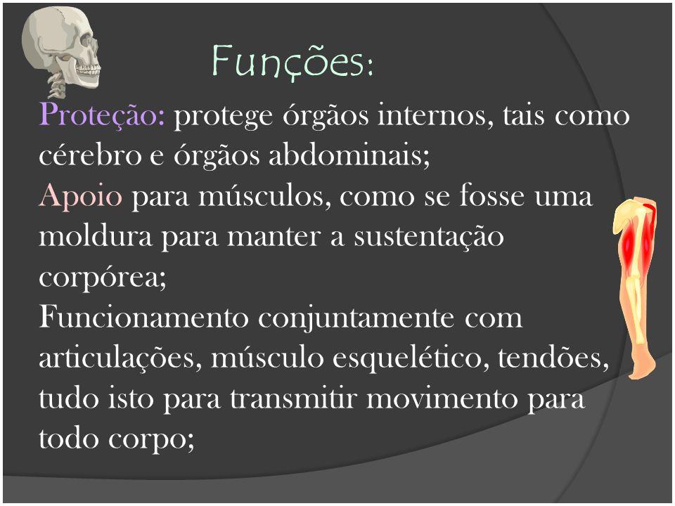 Funções: Proteção: protege órgãos internos, tais como cérebro e órgãos abdominais;