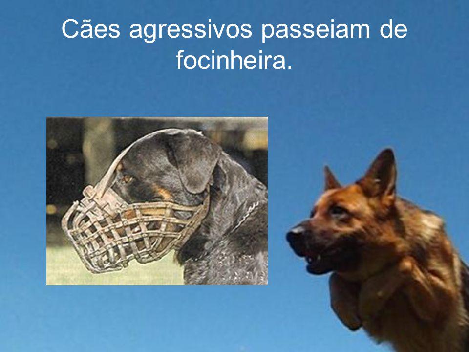 Cães agressivos passeiam de focinheira.