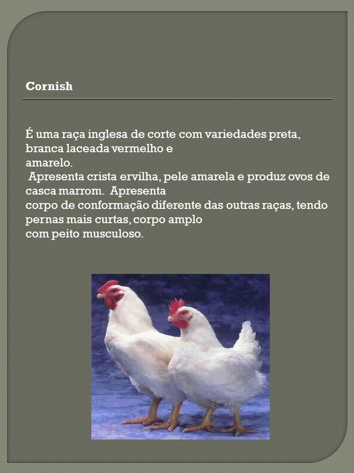 Cornish É uma raça inglesa de corte com variedades preta, branca laceada vermelho e. amarelo.
