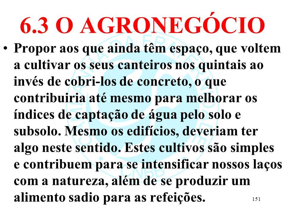6.3 O AGRONEGÓCIO