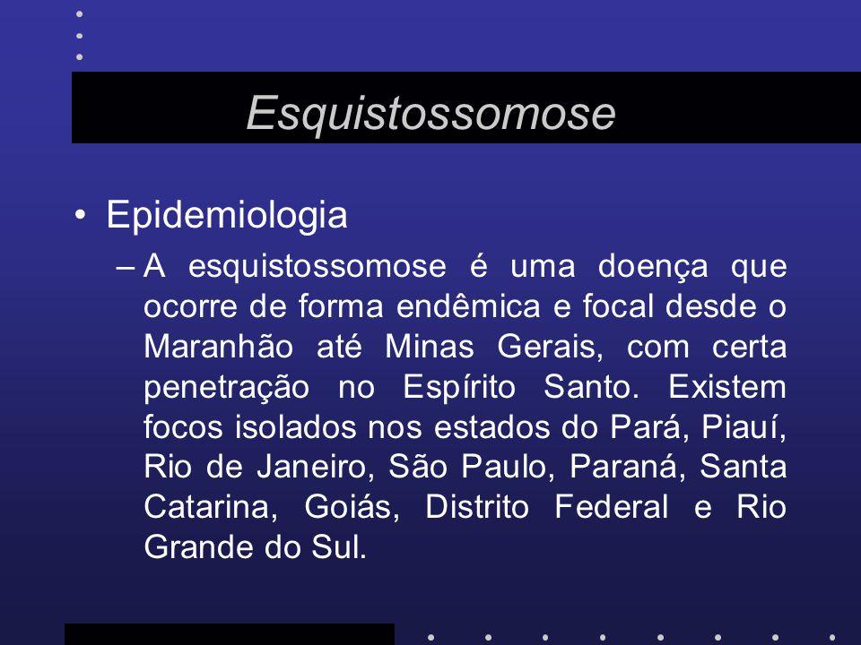 Esquistossomose Epidemiologia