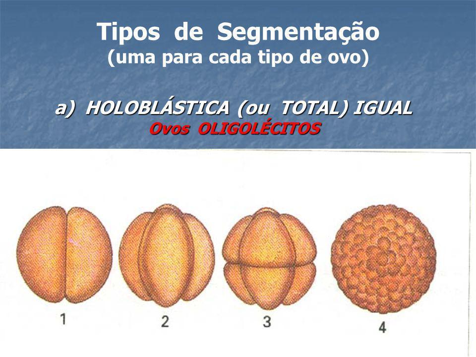 (uma para cada tipo de ovo) a) HOLOBLÁSTICA (ou TOTAL) IGUAL
