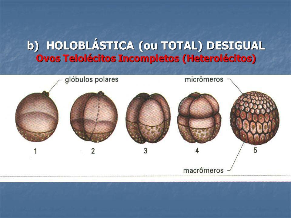 b) HOLOBLÁSTICA (ou TOTAL) DESIGUAL