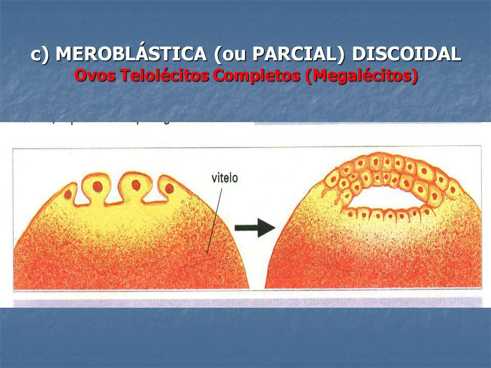 c) MEROBLÁSTICA (ou PARCIAL) DISCOIDAL