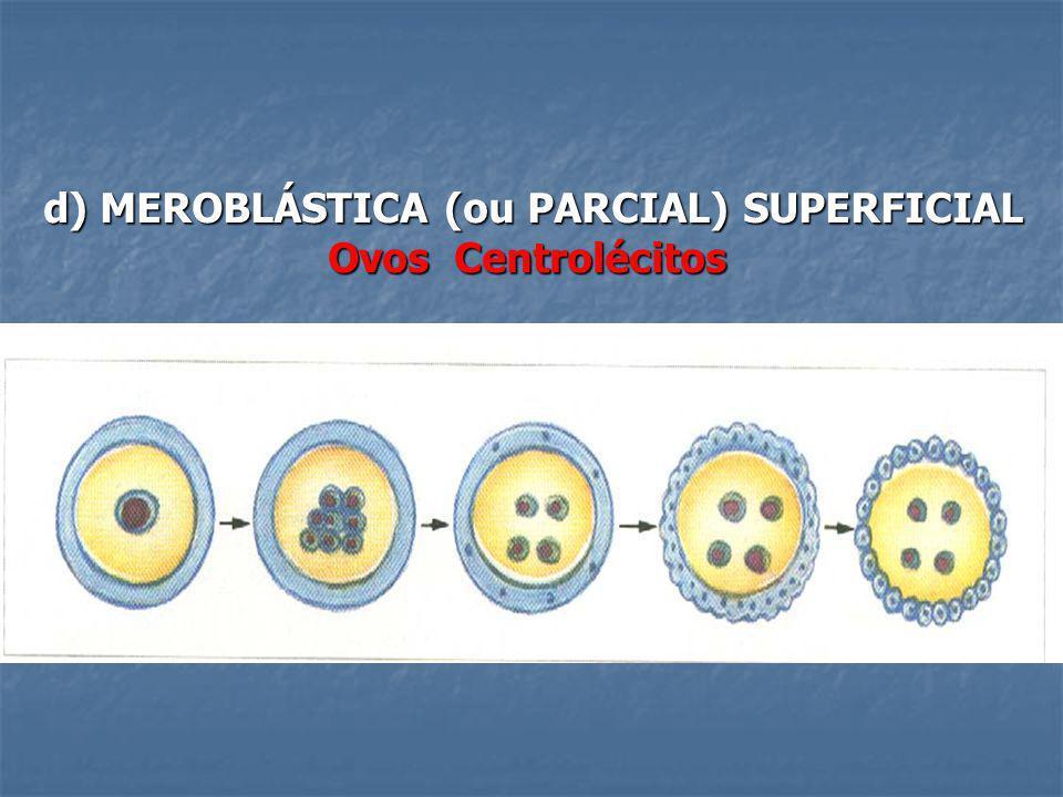 d) MEROBLÁSTICA (ou PARCIAL) SUPERFICIAL