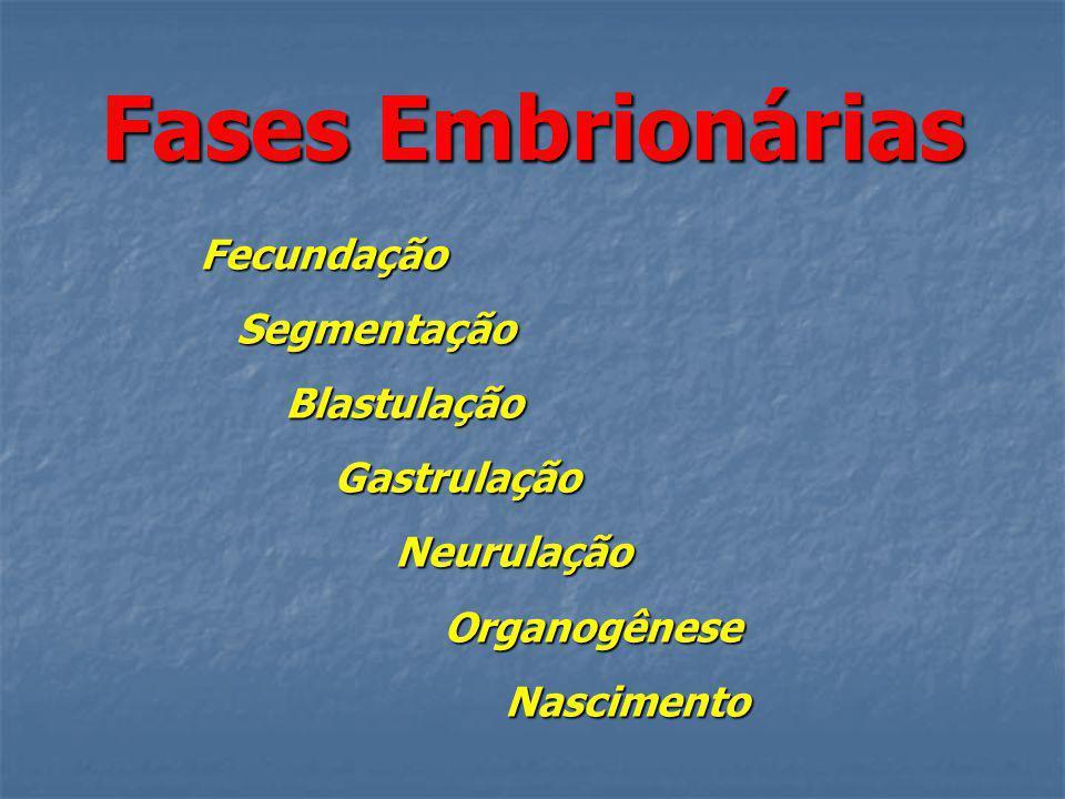 Fases Embrionárias Fecundação Segmentação Blastulação Gastrulação