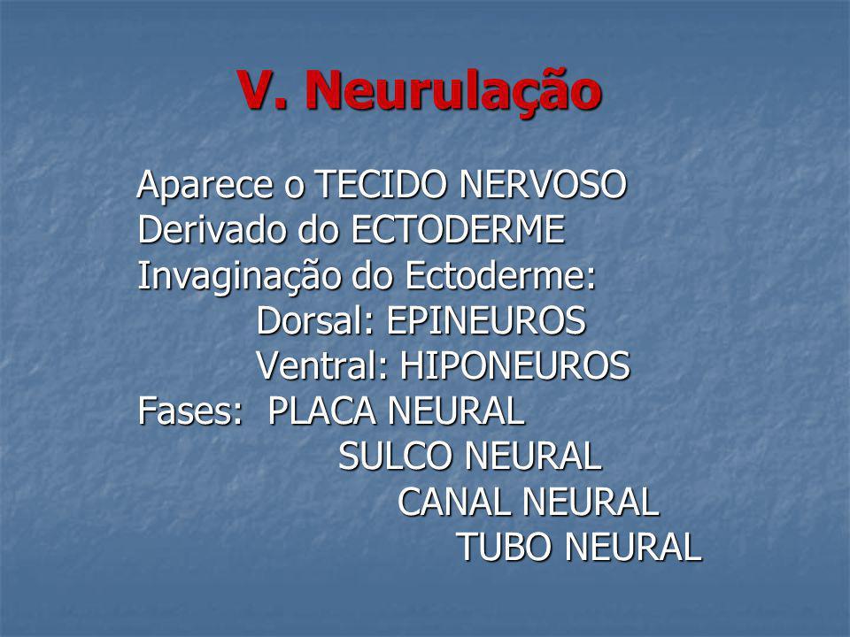 V. Neurulação Derivado do ECTODERME Invaginação do Ectoderme: