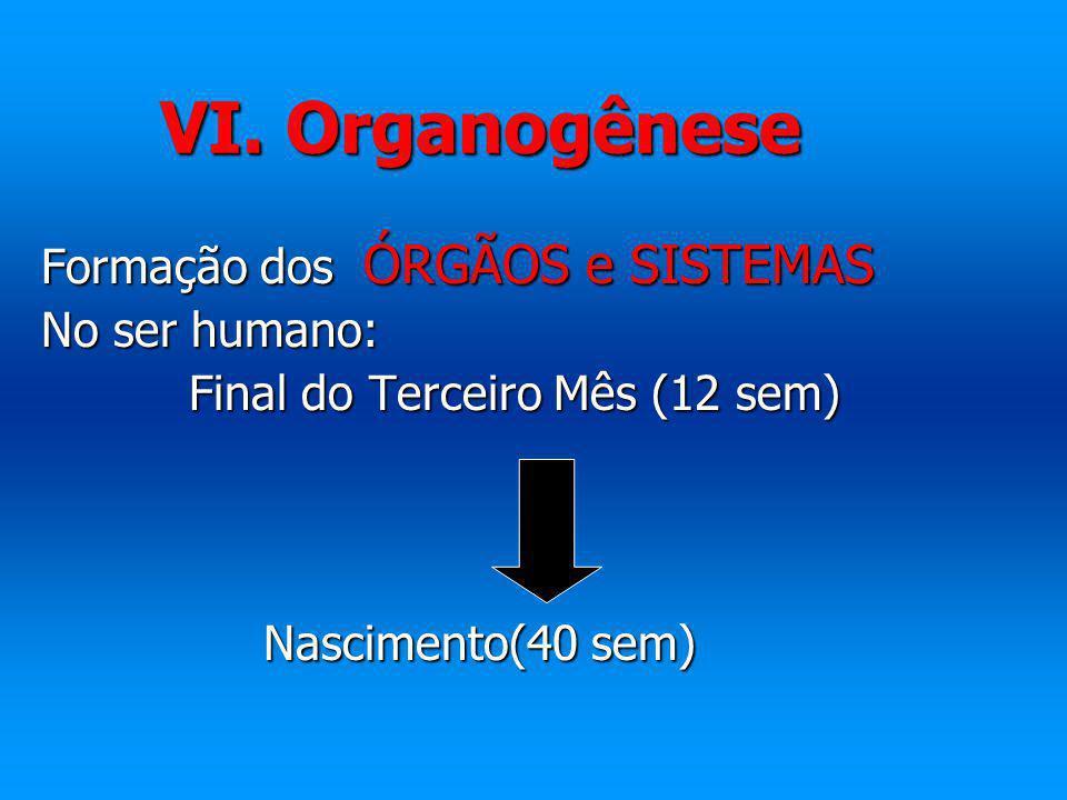 VI. Organogênese Formação dos ÓRGÃOS e SISTEMAS No ser humano: