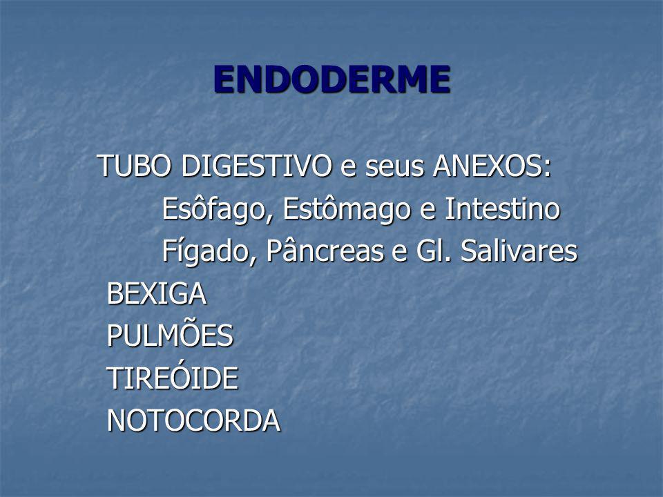 ENDODERME TUBO DIGESTIVO e seus ANEXOS: Esôfago, Estômago e Intestino