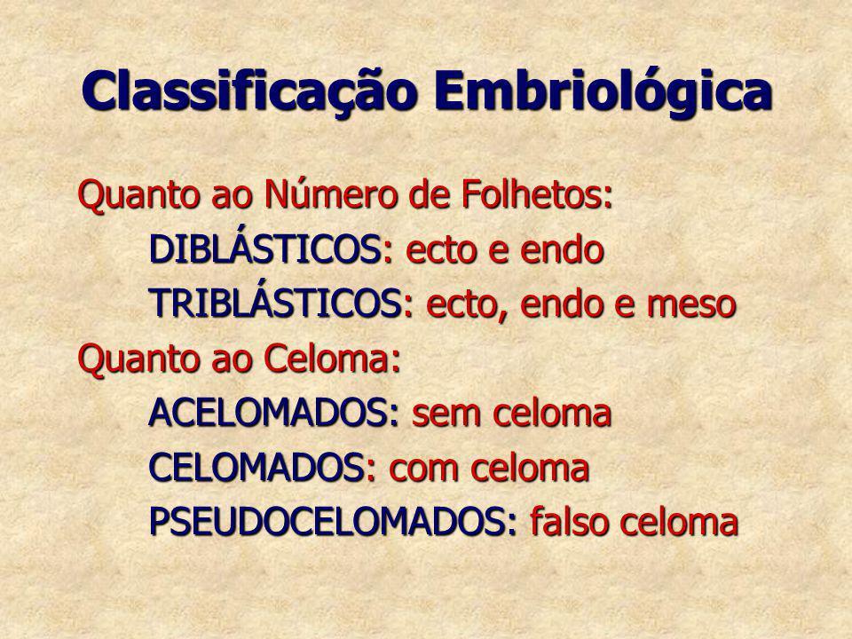 Classificação Embriológica