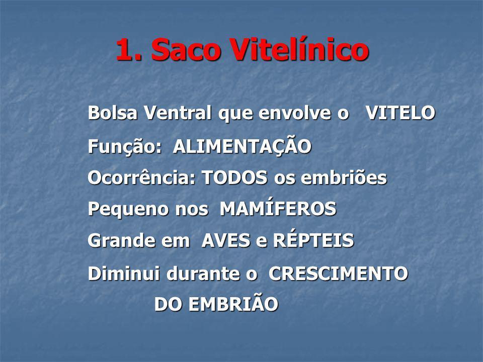 1. Saco Vitelínico Bolsa Ventral que envolve o VITELO