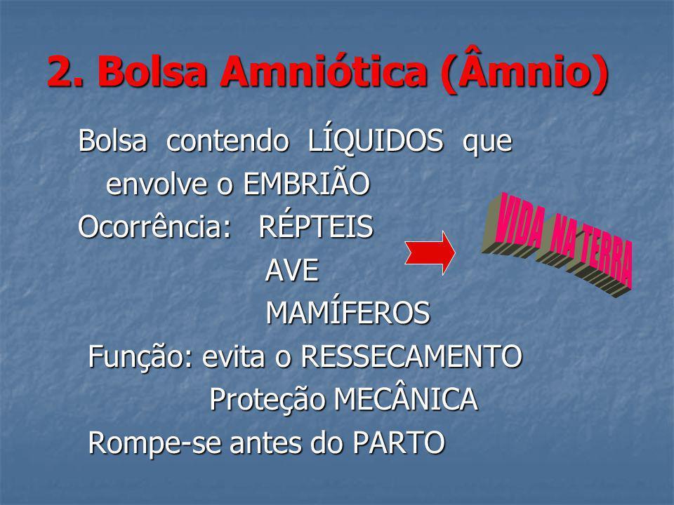 2. Bolsa Amniótica (Âmnio)