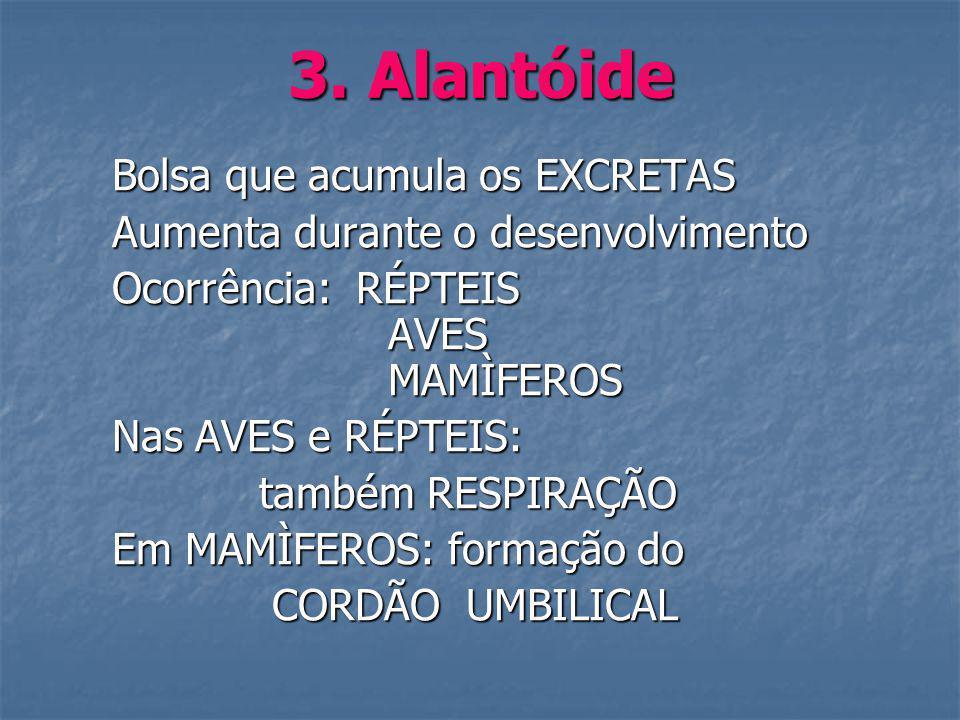 3. Alantóide Bolsa que acumula os EXCRETAS