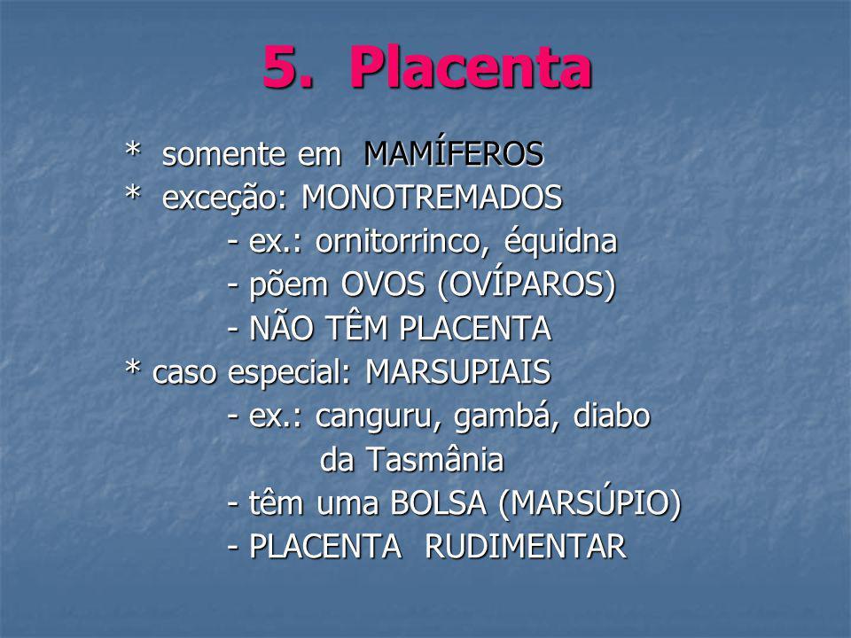 5. Placenta * somente em MAMÍFEROS * exceção: MONOTREMADOS
