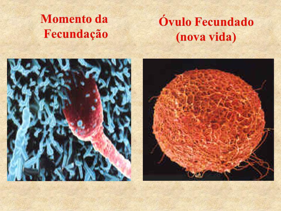 Momento da Fecundação Óvulo Fecundado (nova vida)