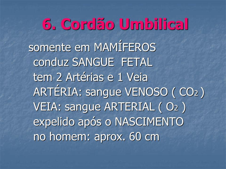 6. Cordão Umbilical conduz SANGUE FETAL tem 2 Artérias e 1 Veia