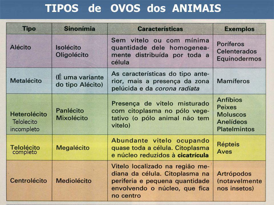 TIPOS de OVOS dos ANIMAIS